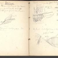 http://glangeaud.bu.uca.fr/archive/carnet-300/carnet-300_Page_22.jpg