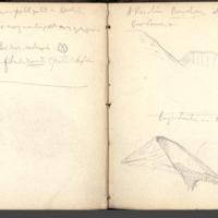 http://glangeaud.bu.uca.fr/archive/carnet-300/carnet-300_Page_33.jpg